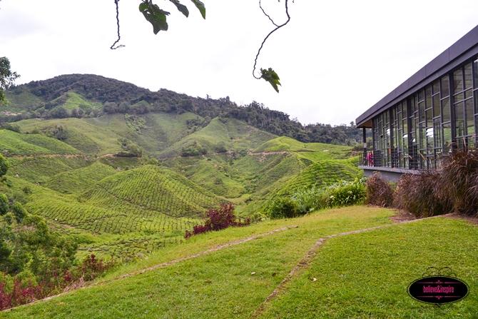 Traveling Malaysia - Cameron Highlands Boh Tea Farm