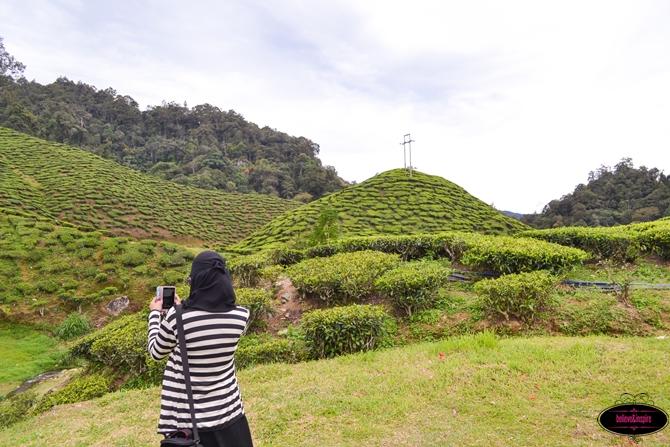 Traveling Malaysia - Cameron Highlands Boh Tea Farm10