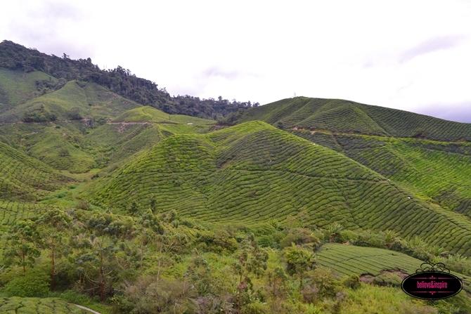 Traveling Malaysia - Cameron Highlands Boh Tea Farm2