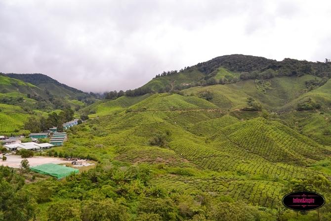 Traveling Malaysia - Cameron Highlands Boh Tea Farm3