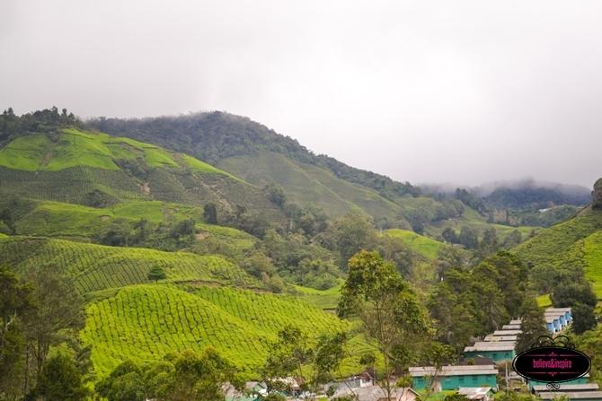 Traveling Malaysia - Cameron Highlands Boh Tea Farm5