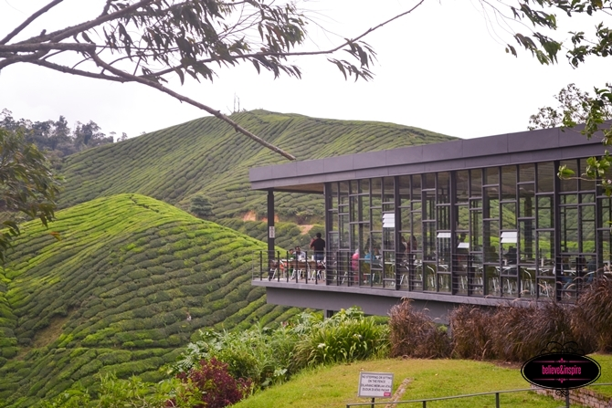 Traveling Malaysia - Cameron Highlands Boh Tea Farm6
