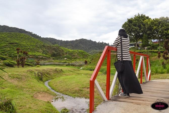 Traveling Malaysia - Cameron Highlands Boh Tea Farm8