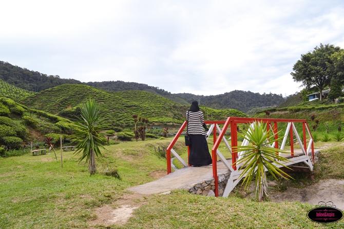 Traveling Malaysia - Cameron Highlands Boh Tea Farm9